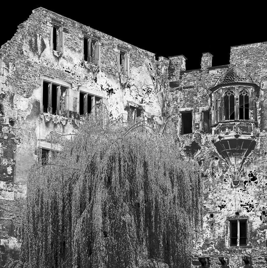 Hof des Heidelberger Schlosses mit Trauerweide