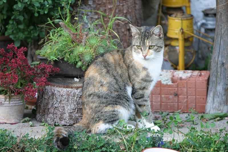 Hof Katze