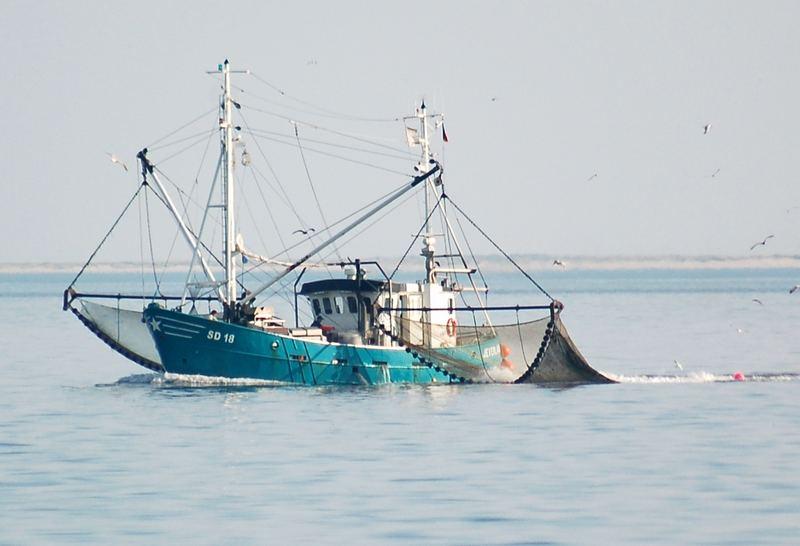 Hoffen auf einen guten Fang, Krabbenfischer in der Meldorfer Bucht