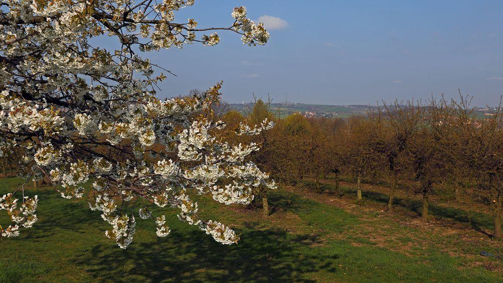 Hoffentlich geht der bittere Kelch des Frostes an den ersten Obstblüten vorüber...