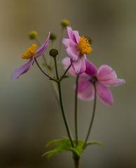 Hoffnung auf Frühling