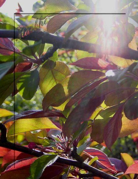 Hoffnung - Ein Lichtstrahl