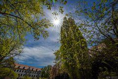 Hofgarten im Gegenlicht