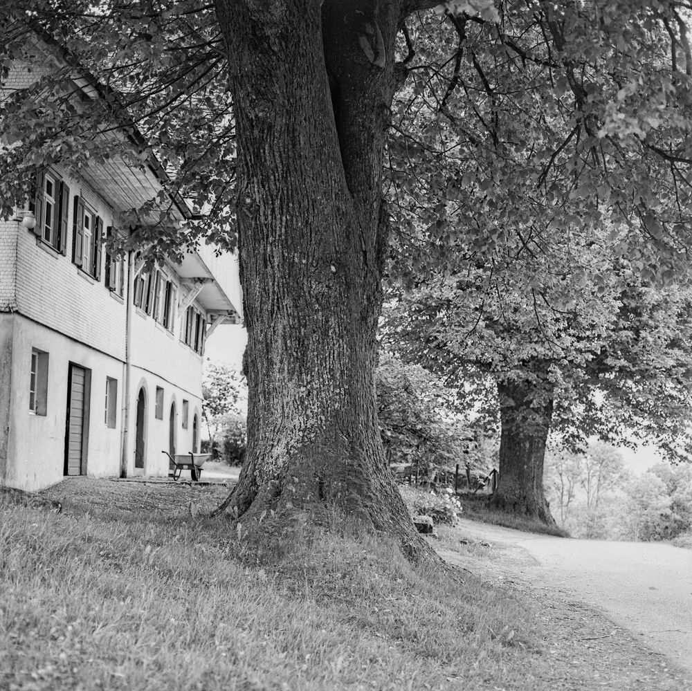 Hoflinden
