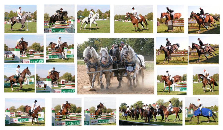 Hohenwalder Pferdetage