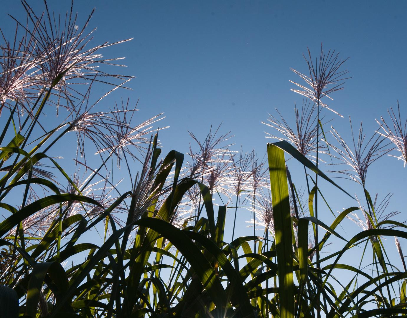 Hohes Gras Am Seeufer Foto Bild Pflanzen Pilze Flechten