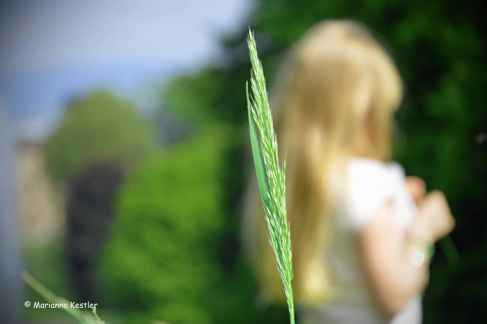 Hohes Gras Foto Bild Pflanzen Pilze Flechten Gräser Natur