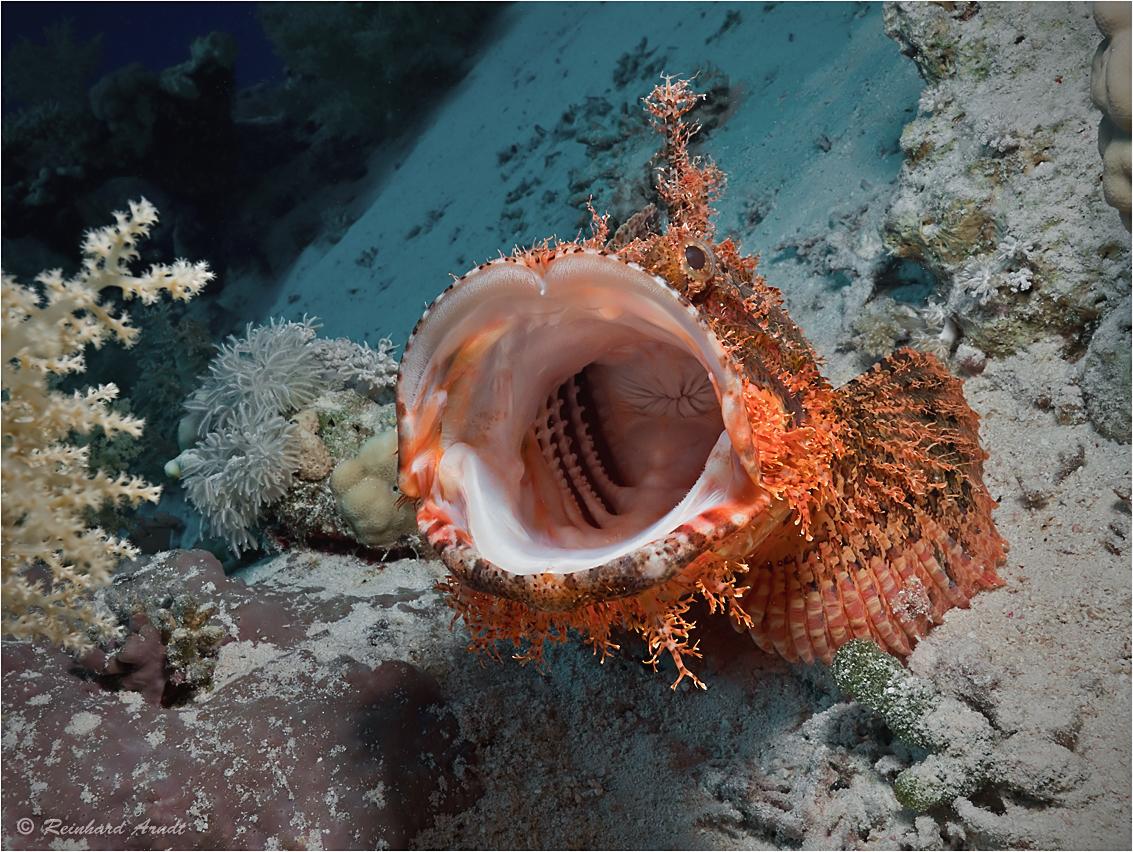 Hohler Fisch