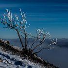 Hohneck-neige