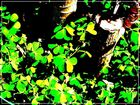 hojas --