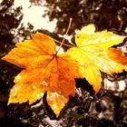 hojas caidas