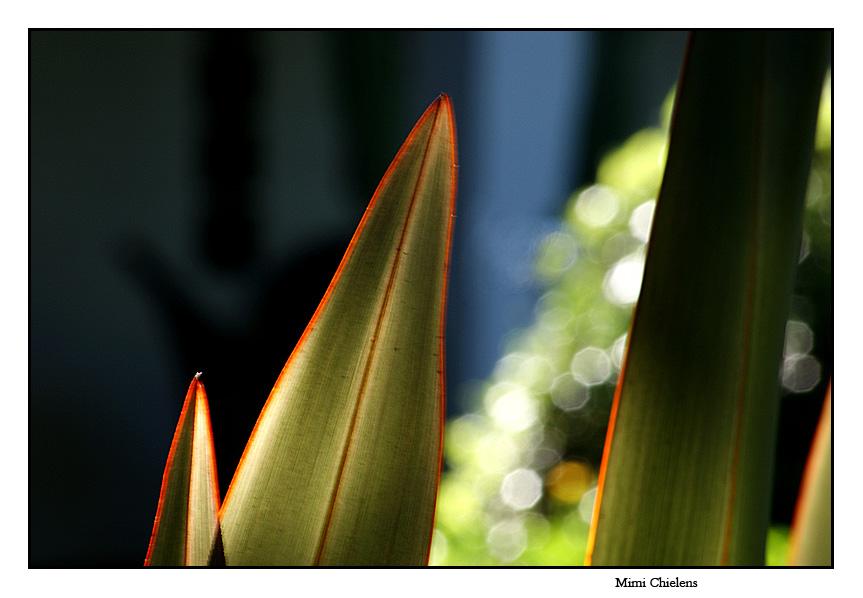 hojas de palmera 1