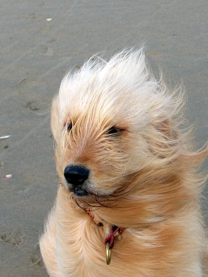Holland Regen Windstärke 8 Foto Bild Tiere Haustiere