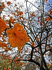 Holmby Rust Tree
