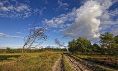 Holter Heide