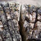 Holz (2)