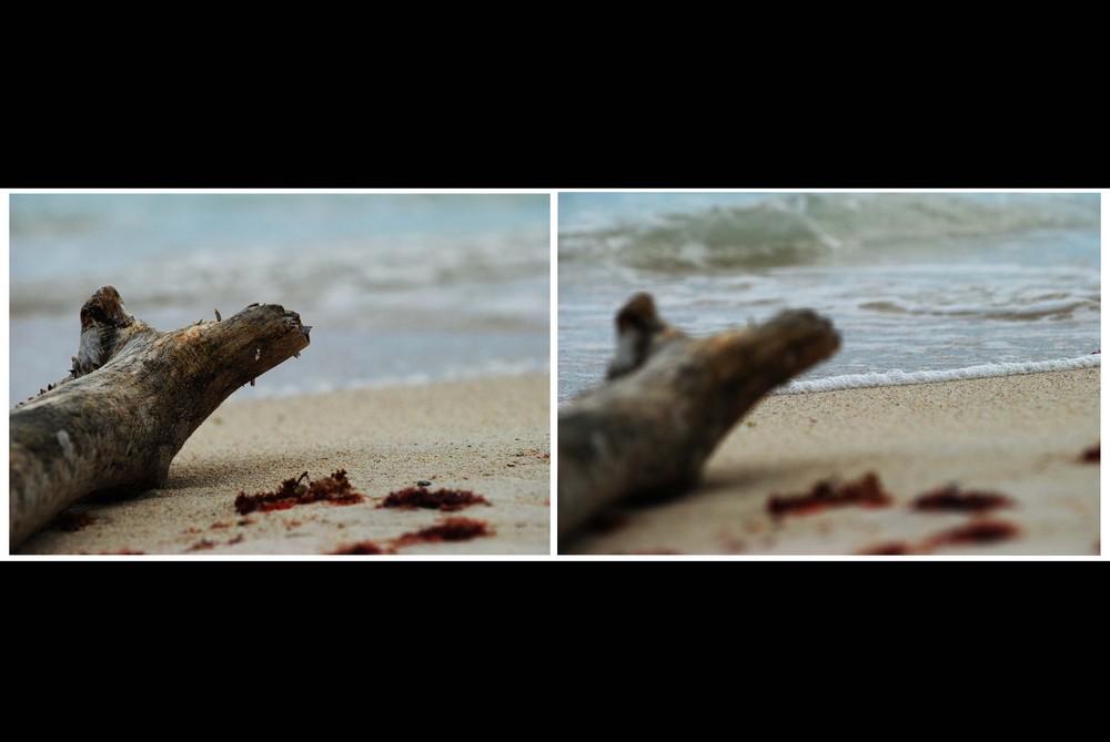Holz am Ufer Mexico´s