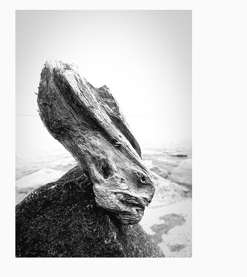 Holz auf Stein