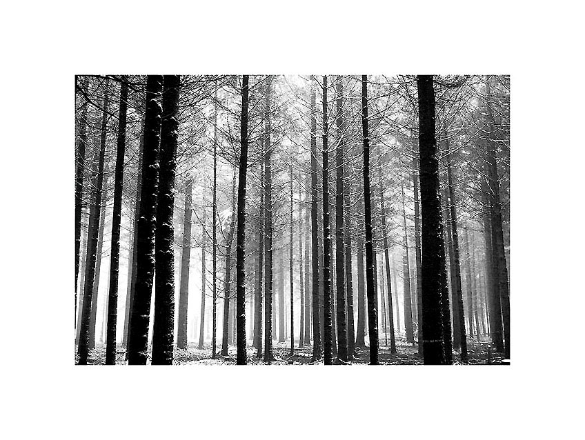 Holz ...