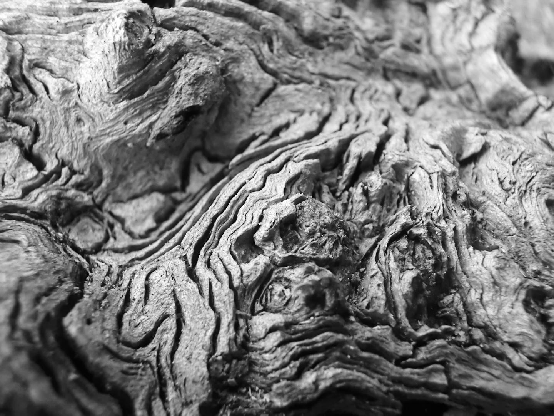 Holz II