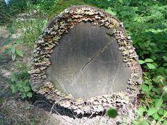 Holz ist nicht ...