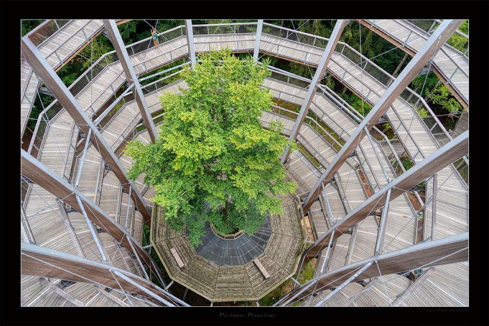 Holz Spirale
