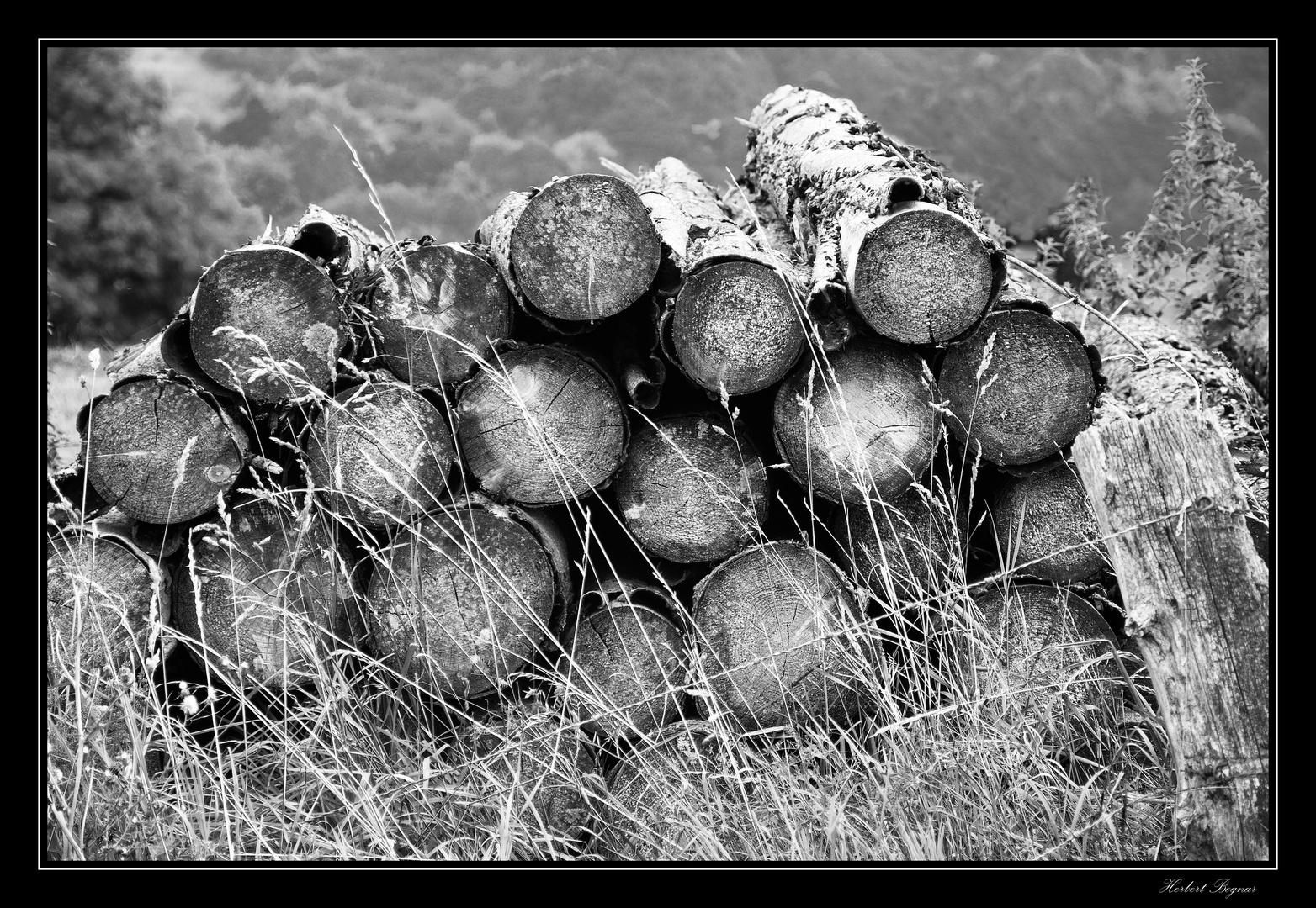 Holz SW