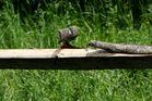 Holz und Laune