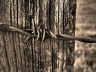 Holz vs. Metall
