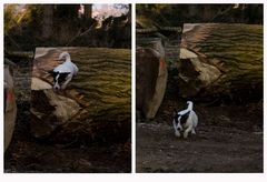 Holzfäller schaffen Spielräume