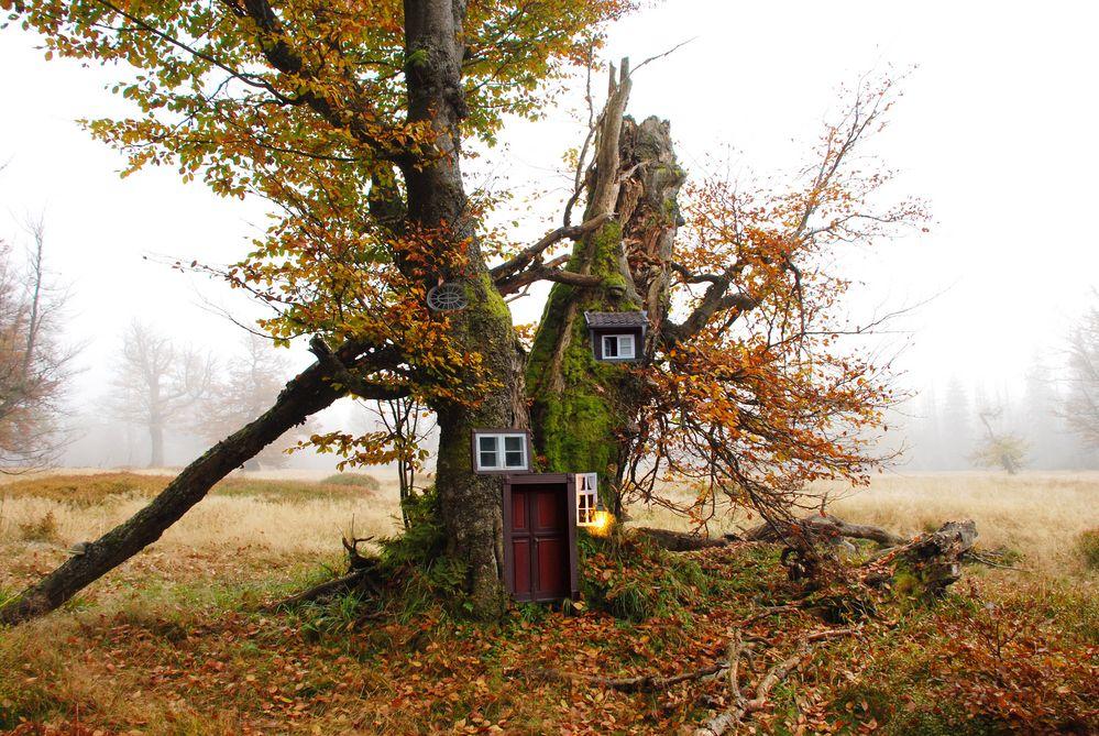 Holzhaus: ökologisch, nachhaltig, umweltfreundlich