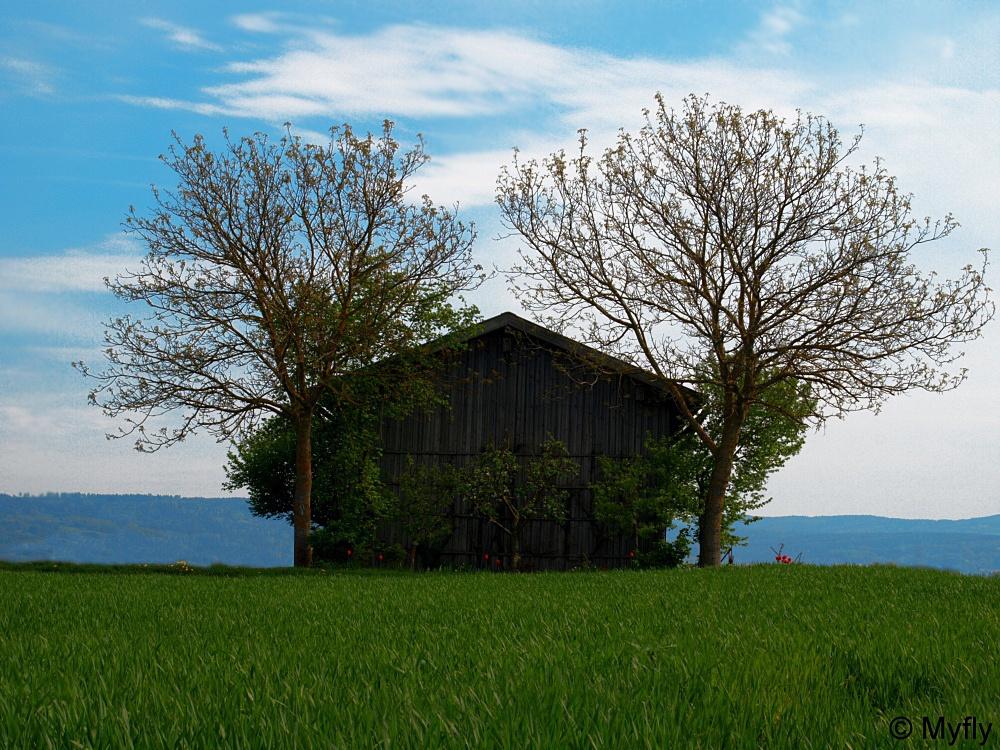 Holzhütte bei Pfatter (HDR)