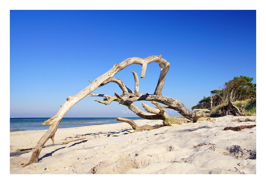 Holzsklulpturen am Strand