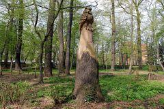 Holzskulptur im Kurpark Bad Liebenwerda