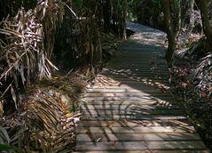 Holzsteg in den Wetlands