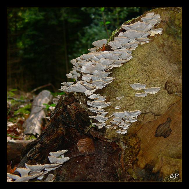 Holzverarbeitung...