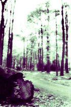 Holzweg (Pinhole)