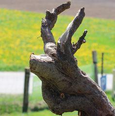 Holzwurzelhirsch