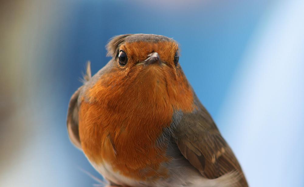 Homenaje dia de las aves