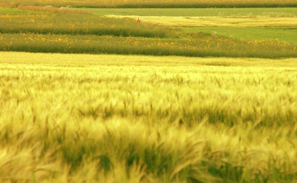 Hommage á Claude Monet : Sich in der Landschaft verlieren... (Sommer 2006)