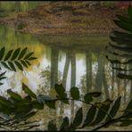 Hommage à Henri Rousseau - Gibt es eine Naive Fotografie... ?