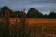 Hommage an eine Landschaft