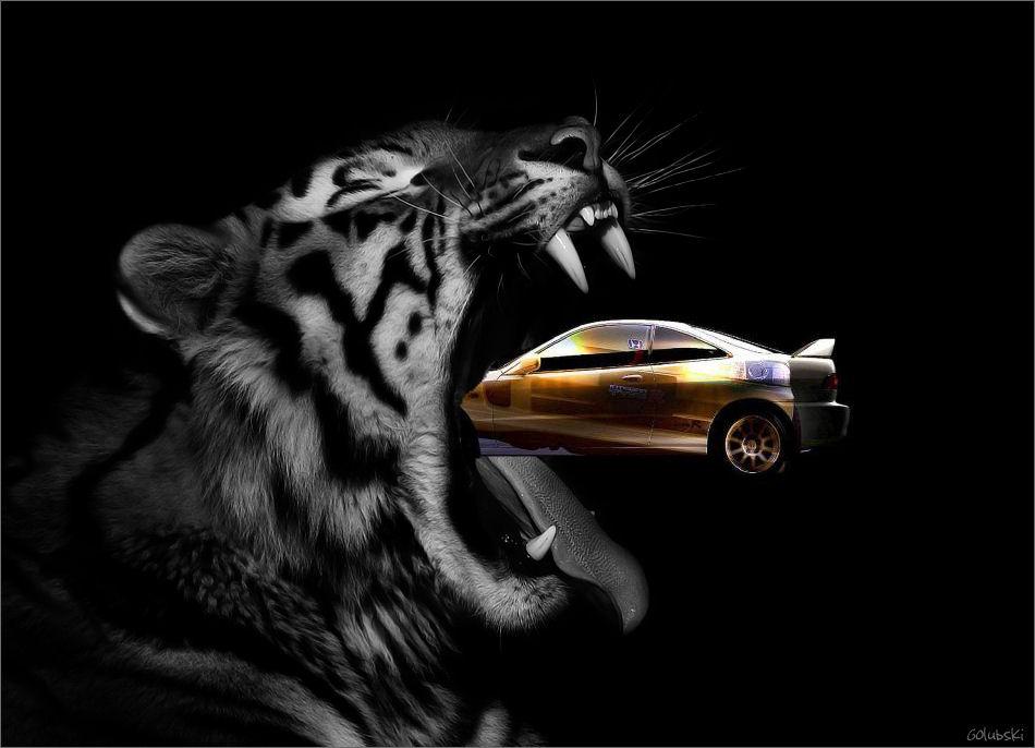 Honda in Tigerkopf