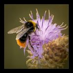 Honey Fly-In