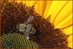 Honey seeker