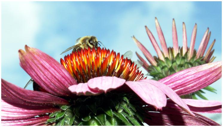 """Honeybee's Kingdom 02"""