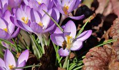 Honig in Sichtweite