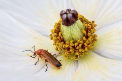 Honig und Blütenstaub schmecken gut