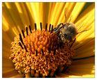 Honigfabrikation
