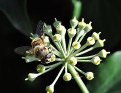 Honiggenuss
